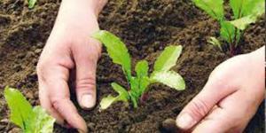 اتحاد النقابات الزراعية: معارضة استمرار الدعم إعدام لآخر القطاعات المنتجة
