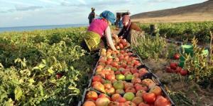 مصر : ارتفاع حجم الصادرات الزراعية بنحو 5%