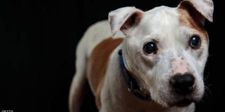 كلبة إنتظرت صاحبها المريض أمام المستشفى لأيام – فيديو