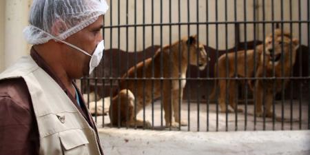 حديقة حيوان تحبس البشر وتطلق الحيوانات … فيديو